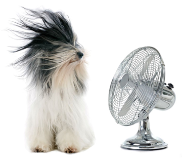 Beat the Heat with Benfatti Air Conditioning